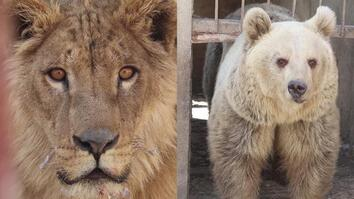 War-Torn Zoo's Last Surviving Animals Rescued in Mosul