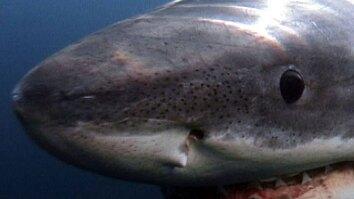 Shark Attack: Survival Guide