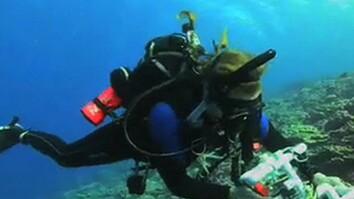 Flint Island's Coral Reefs