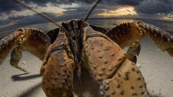 "Crabzilla: Photographing a ""Monster"" Crab"
