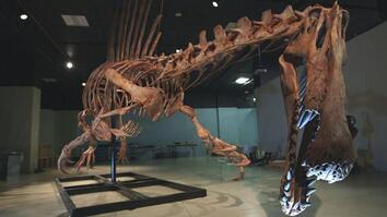 Bigger Than T. rex: Spinosaurus