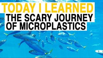 TIL: From Fleece Jackets to Your Food: The Scary Journey of Microplastics