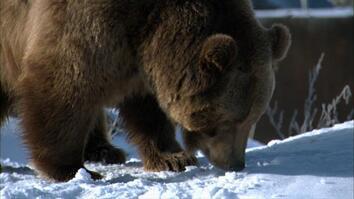 Touchdown Brutus!